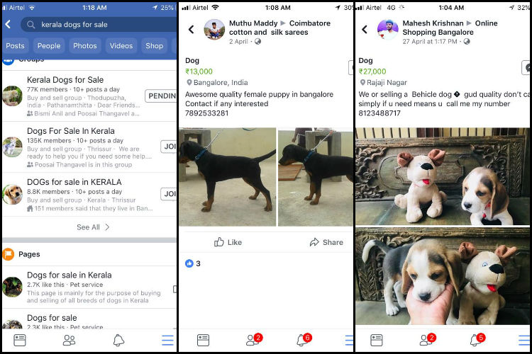 Illegal sale of dogs flourishes online: Why activists are up in arms