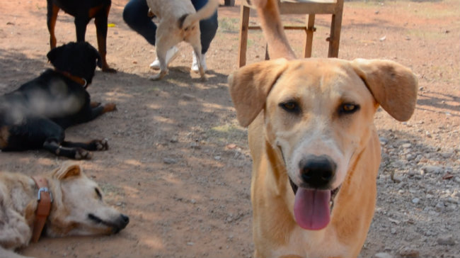 Trauma and heartbreak: What happens to abandoned dogs in Bengaluru