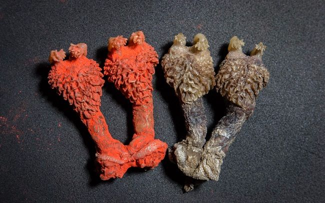 Dried lizard penises from India sold as good luck charms