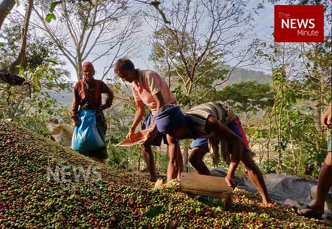 Araku's coffee is world-famous, but why are its farmers