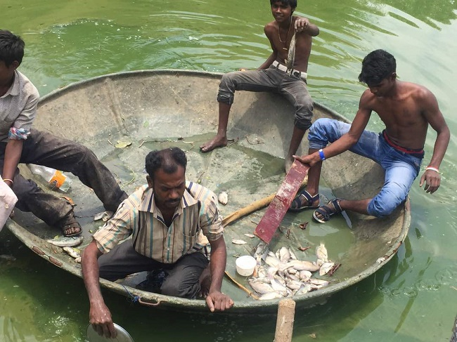 Lake of dead fish in Bengaluru: After a stinky, sleepless night for