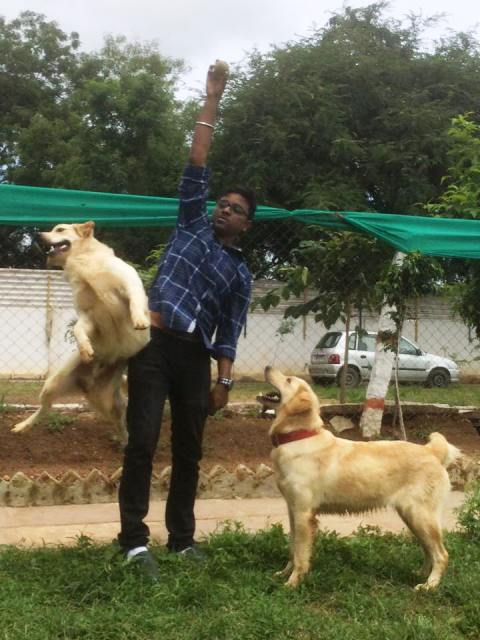 Pet therapy: This Hyderabad dog kennel offers a unique way