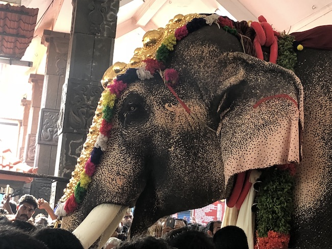 Kerala S Celebrity Elephant Meet Ramachandran Who Kickstarted Thrissur Pooram The News Minute The temple elephants in kerala are decorated with gold plated caparisons (nettipattom), bells, and necklaces. kerala s celebrity elephant meet