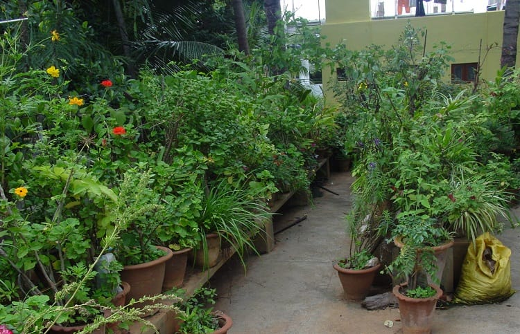 Bengaluru's oldest urban farmer leads the way in sustainable