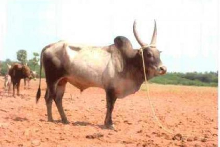 essay on cow in telugu Free essays on my pet cow essay in hindi get help with your writing 1 through 30.