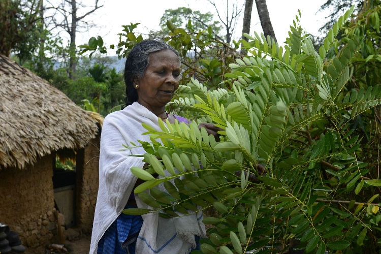 Grandmother of the jungle: This Kerala tribal woman can