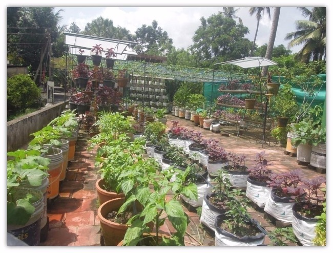 There's an organic farming revolution building in Kerala