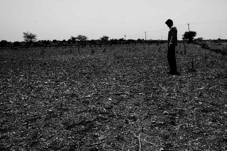 photo essay the severe water crisis haunting maharashtra s  a farmer inspects his damaged soybean crop after a prolonged drought in the village of murud akola in marathwada