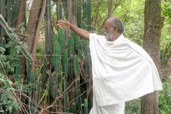 Why farmers in TN are reverting to trees and thorny cacti as traditional bio-fences