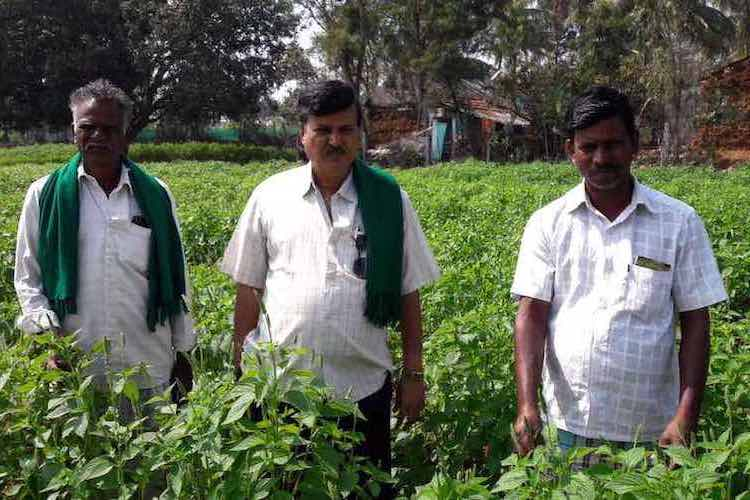 How cultivating chia seeds is helping Mysuru farmers boost agricultural income