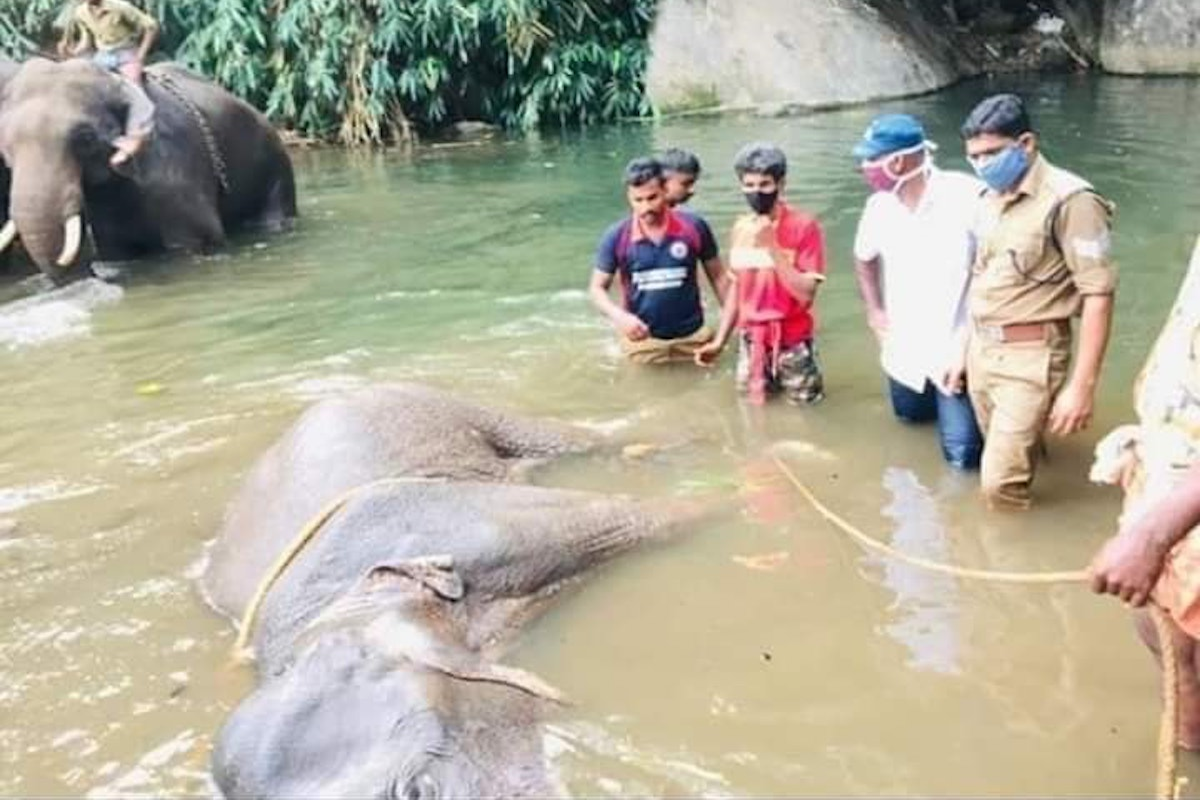 Pregnant elephants killing not the first Cruel practice of snaring rampant in forests