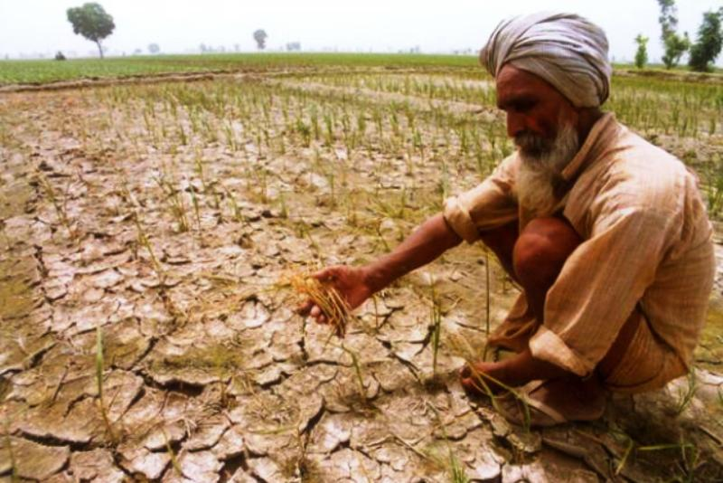 Image result for drought farmer suicide