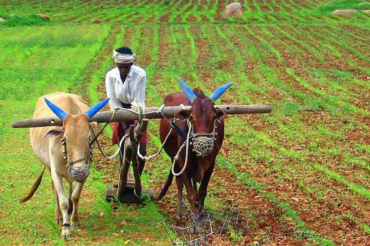 How an online platform is bringing TN farmers and consumers closer together
