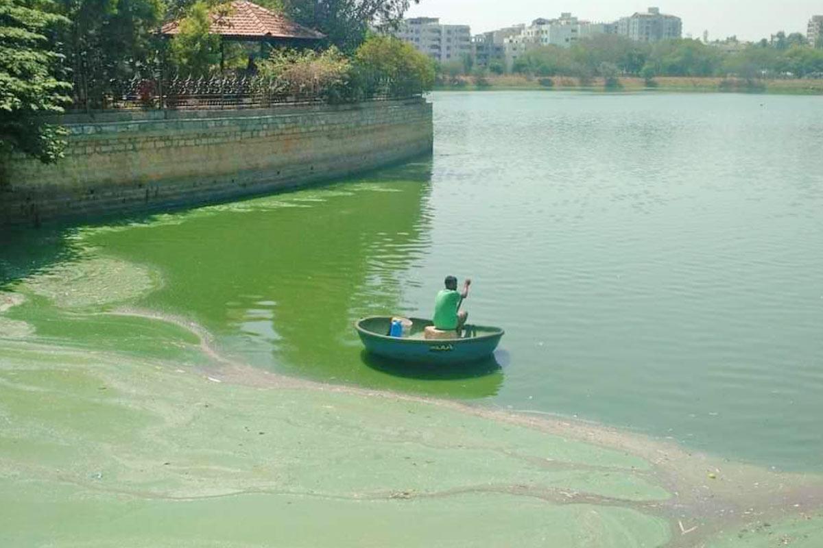 A Bengaluru lake is degenerating due to algae bloom from untreated sewage