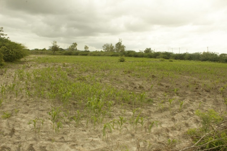 Why land degradation in India has increased and how to ...