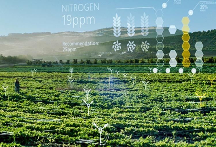 Microsoft India Is Using Ai Sensors To Make Farming And