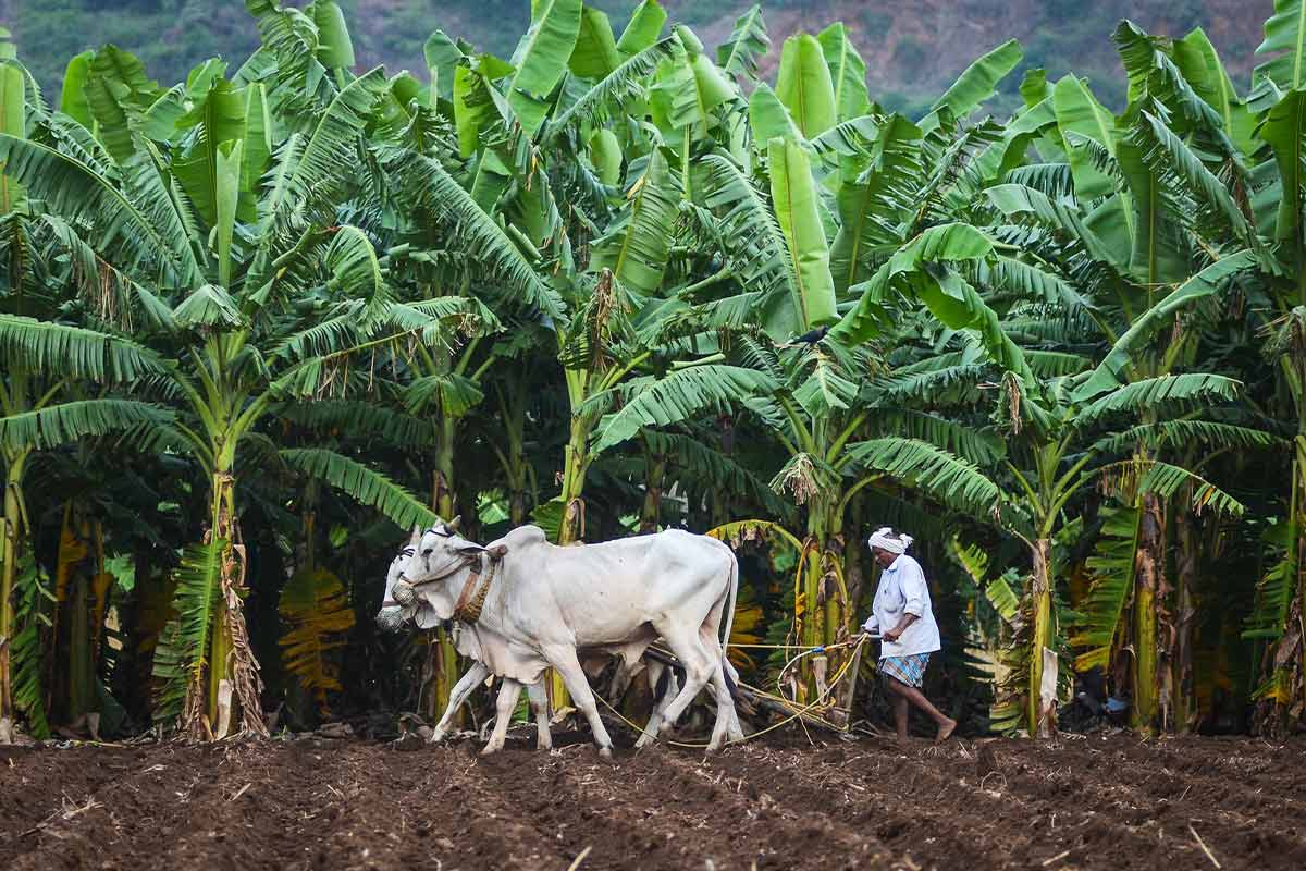 Opinion How Indias new Farm Acts encroach upon states rights