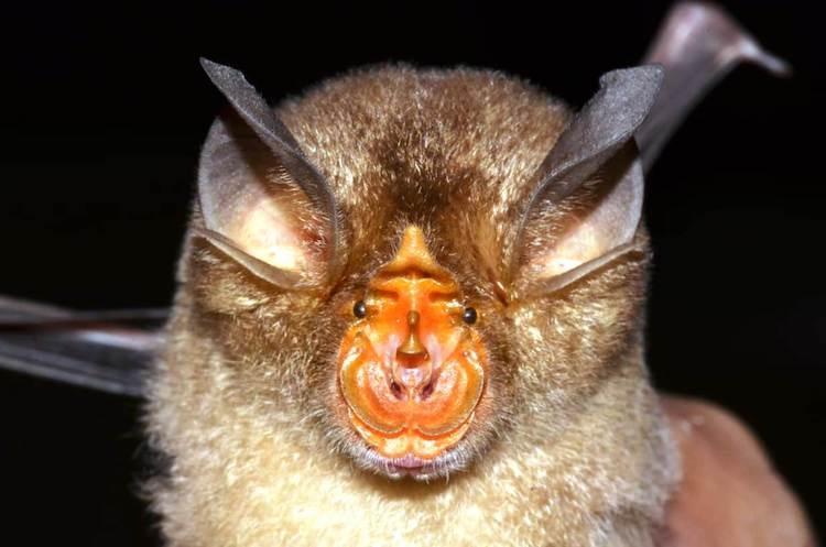Seven new bat species identified in Kerala