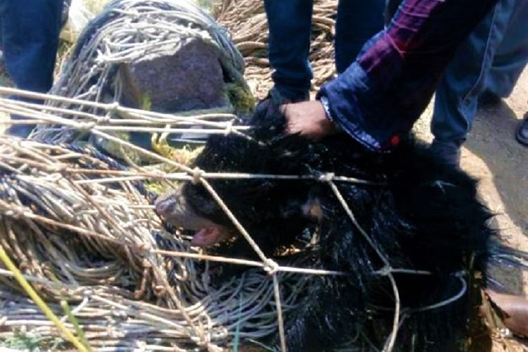 Two bear cubs rescued in Telangana after falling into 70-ft deep well