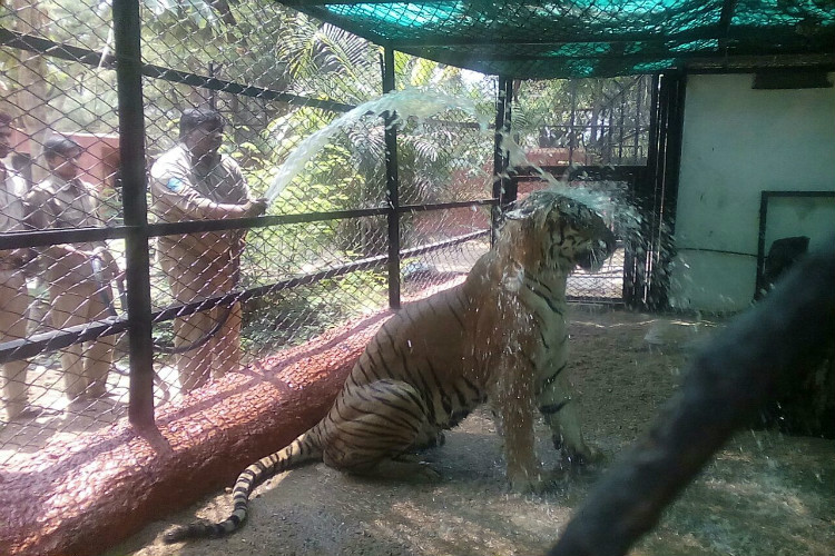 Check Out Hyderabad Zoo S Plans To Keep The Animals Thanda Thanda