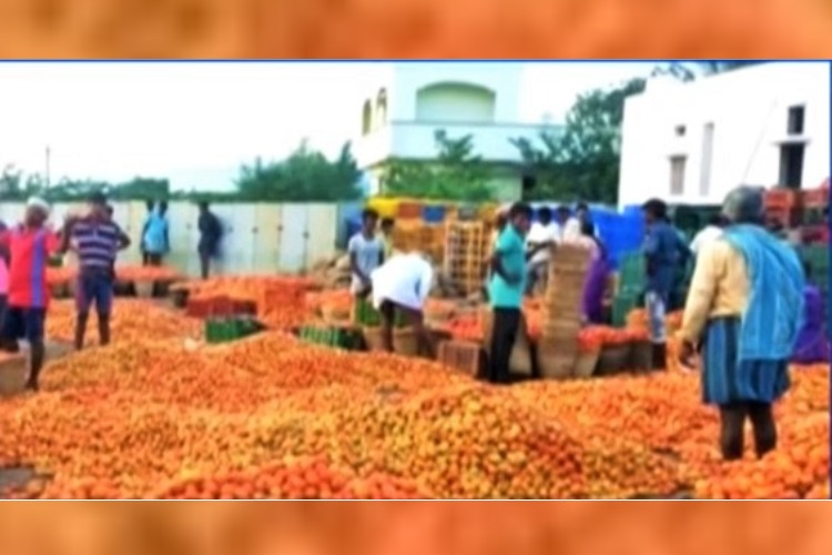 After angry tomato farmers dump entire produce, Andhra govt intervenes