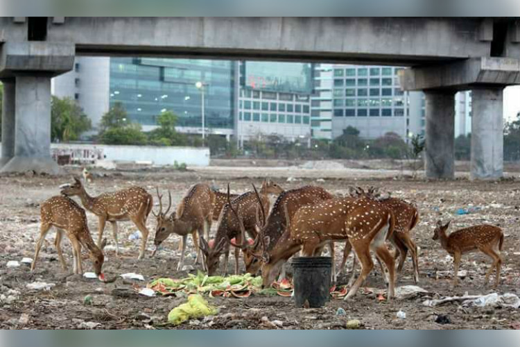 Seen the photos of deer eating garbage in Chennai? Here's the story behind it