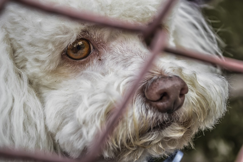 Can Dogs Feel Empathy