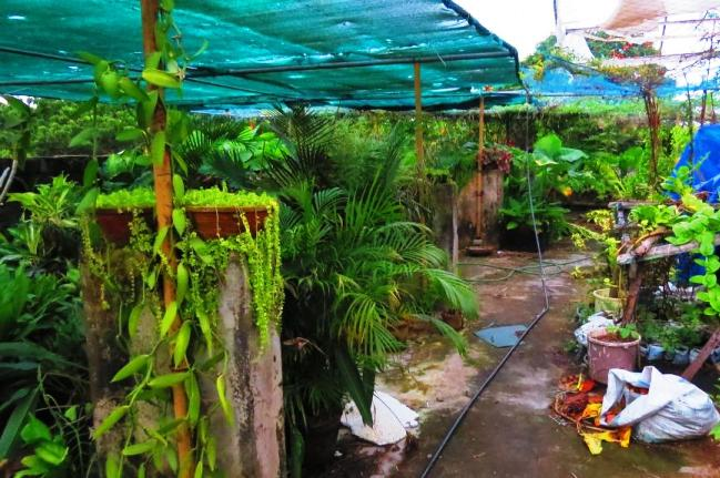 Have you heard of a lush green farm on a mall's rooftop? There's one in Kerala