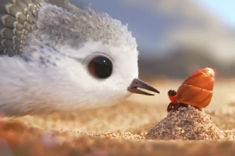 Disney pixar 39 s short film piper is the most adorable for Watch balcony short film