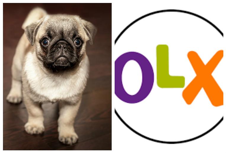 Olx in kerala dogs