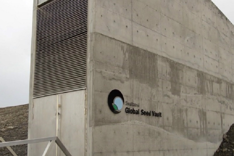 Watch The Doomsday Vault An Arctic Seed Bank That S Insurance
