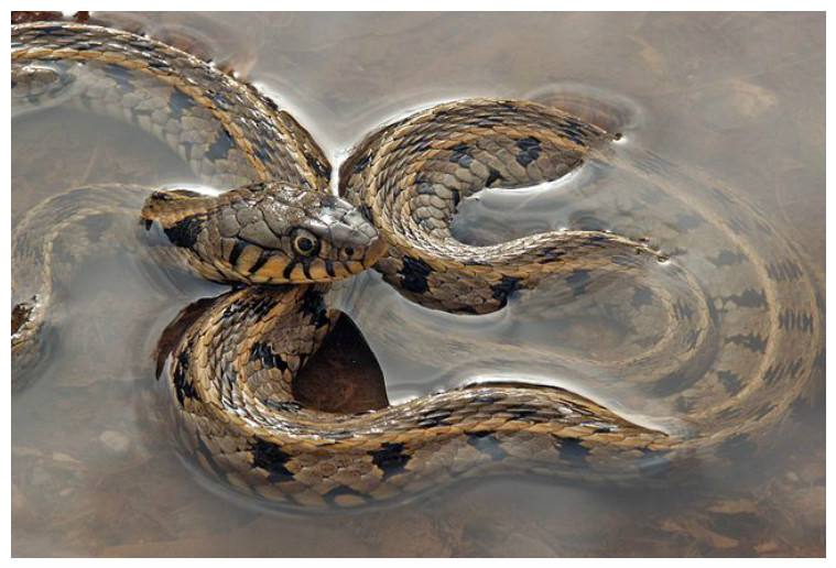 Warning - Dead Snake! Houston, Tx. I think yellow belly ... |Snake Like Water Animals