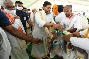 Andhra CM Jagan attends cow puja event on Kanuma eve