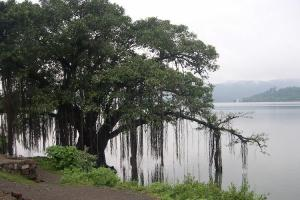 The tree of knowledge is not an apple or an oak but a banyan
