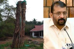 A beloved banyan tree is dying slowly after Kerala floods Speaker seeks help
