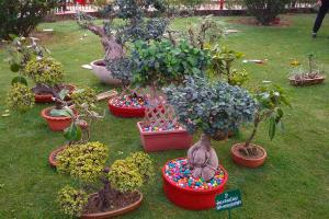 Retired IPS officer complains that rare bonsai plant stolen from his house