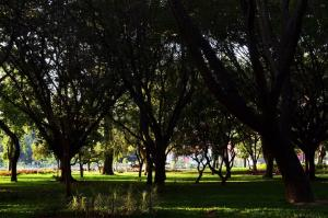 After one-year delay Smart City work commences in Bengalurus Cubbon Park