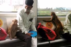 Monkeys ticketless travel on Delhi Metro caught on camera