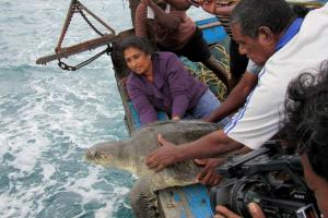 Meet the Chennai woman behind one of Indias largest sea turtle conservation programmes