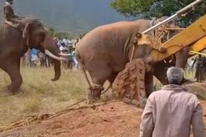 Why translocating elephants may not be the ideal way out of man-animal conflict