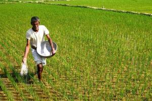 Telangana govt cracks down on sale of spurious seeds 13 booked