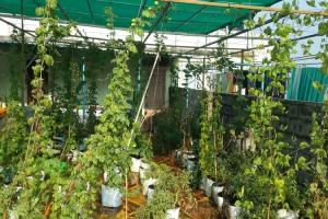 How gardening has emerged as a favourite pastime for many amidst lockdown