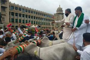 Congress leaders protest fuel price rise with bullock cart rally in Bengaluru