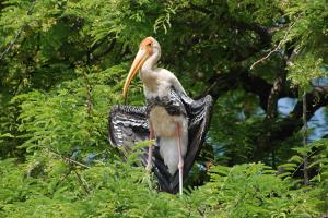 Karnatakas Kaggaladu bird sanctuary Where painted storks and people co-exist