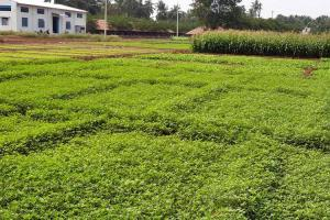 Kovai-based Keeraikadai is approaching farming with science and logic