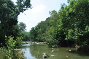 Keralas ecotourism spot Kuruva Island opens to public after two years