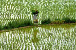 Decoding Telanganas crop regulation system Ambitious goal but farmers skeptical