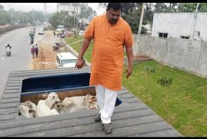 BJP MLA Raja Singh turns cow vigilante stops truck allegedly headed to slaughterhouse