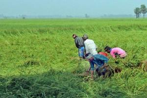 Creating green sustainable livelihoods is the road to recovery post-pandemic