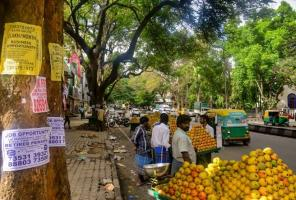 Secular sacred and domestic Living with street trees in Bengaluru